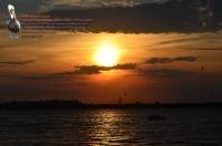 Sunset scene Boat, Verrazano, Birds