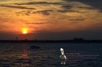 Verrazano Boat Sunset 021